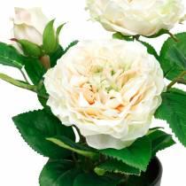 Peon i en gryte, romantisk dekorativ rose, silkeblomst kremhvit