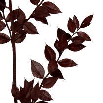 Ruscus kvister mørkerød 75cm - 95cm 1kg