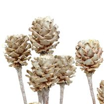 Salignum hvitvasket 25stk