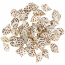 Deco maritime snegler natur 1-4cm 1kg