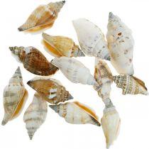 Dekorative snegleskall er tomme i et basnett Sjøsnegler 400g
