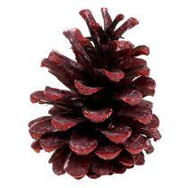 Svarte furukegler røde frost 5-7cm 1kg