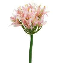 Silkeblomst agapanthusrosa 80cm