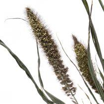 Tørkede blomster Setaria antrasitt naturlig hirse haug 100g