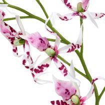 Edderkopp orkideer Brassia Pink-White 108cm 3stk