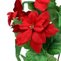 Bukett julestjerne rød L47cm