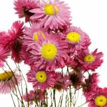 Halmblomst i en haug Rosa tørkede blomster 25g