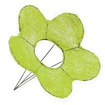 Sisal mansjettblomst grønn Ø25cm 6stk