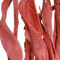 Strelitzia etterlater røde frostede tørre blomster 45-80cm 10stk