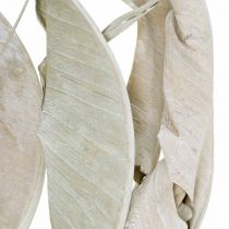 Strelitzia blader vasket hvite, tørket 45-80cm 10stk
