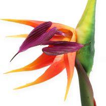 Strelitzia paradisfugl blomst 62cm