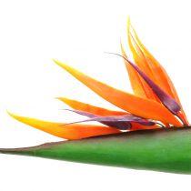 Strelitzia paradisfuglblomst 95cm