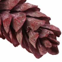 Strobus kjegler naturlig dekorasjon rød 15cm - 20cm 50stk