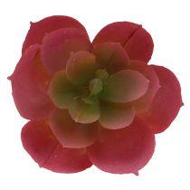 Sukkulent Ø5cm rosa 6stk