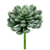 Sukkulentgrønt Ø8,5cm L13cm