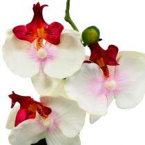 Borddekorasjon orkide i kremgryte H29cm
