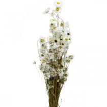 Tørkede blomster Akroclinium Hvite blomster Tørkede blomster 60g