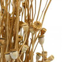 Tørkede blomster valmue kapsler naturlig tørket villtørking dekorasjonspakke 100g