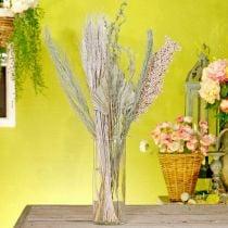 Tørkede blomster eksotisk hvit-natur-blanding, tørr flora-blanding