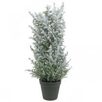 Kunstig einer i en gryte, kunstig plante H47cm