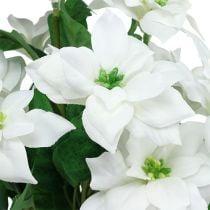 Julestjerner bukett hvit L45cm