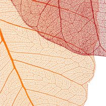 Willow Skeletton oransje / rød 200p.