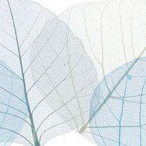 Willow leaves skjelettblå, grå assortert 200stk