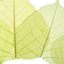 Willow leaves skjelett gul blanding 200p
