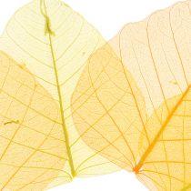 Willow forlater skjelett gult, oransje 200p