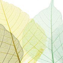 Willow etterlater skjelett grå, gul, turkis 200p