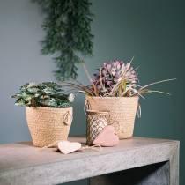 Sinkpotte med jute-planter Ø13cm H12cm
