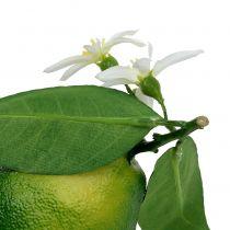 Sitroner med blomst 9,5cm grønn 4stk