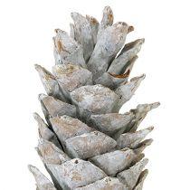 Sukkerkegler, hvitkalkede 20cm - 30cm