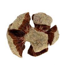 Cypress kongler naturlig 3cm 500g
