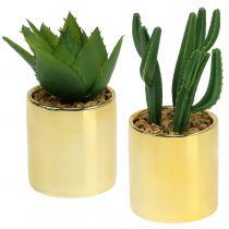 Kaktusgrønn i gylden gryte 12cm - 17cm 4stk
