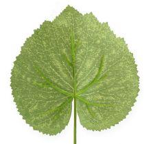 Dekorative planter blader Galax W10cm L22cm 24stk