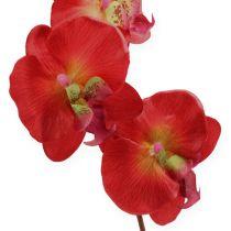 Dekorativ orkidé rød 68cm