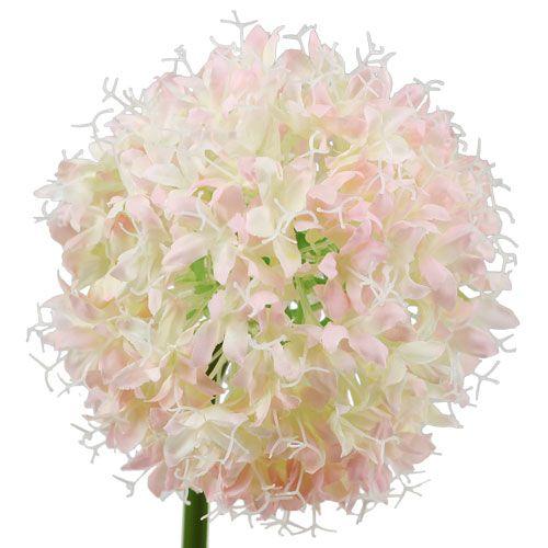 Allium kremrosa Ø15cm L70cm