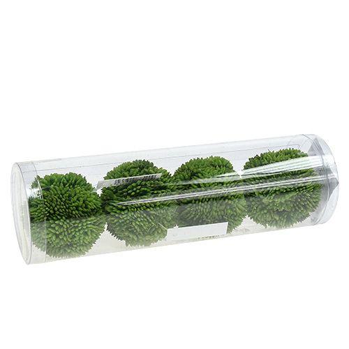 Alliumkule 5cm grønn 4stk