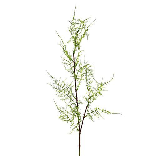 Aspargesgren 75cm grønn 3stk