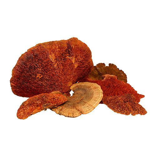 Tresvamp oransje 1kg