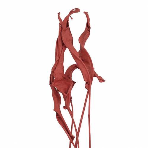 Dekorative blader Strelitzia rød 95-110cm 10stk