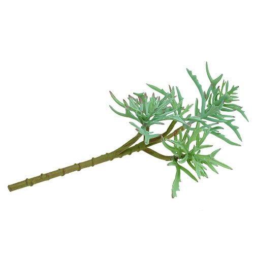 Echeveria 33cm lysegrønn