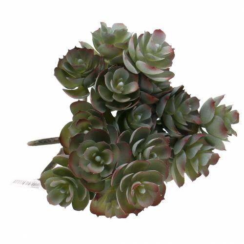 Sukkulent Echeveria mørkegrønn 21cm 3stk