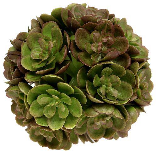 Echeveria ball 5cm grønn 4stk