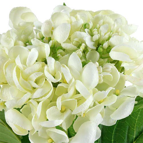 Hortensia 60cm hvit