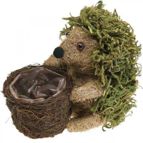 Pinnsvin med kurvgrønn, høstdekorasjon for planting, dekorativ plantekurv H24cm Ø9,5cm