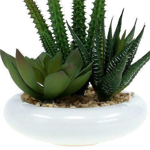 Kaktus i gryte Ø12cm 1p