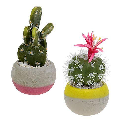 Kaktus i gryteblanding H13cm 4stk