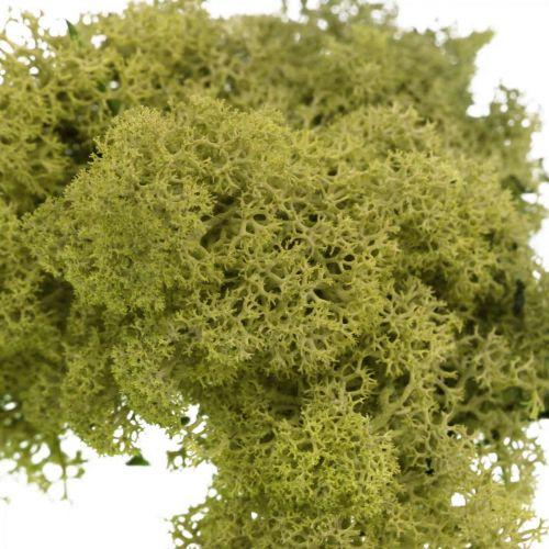 Dekorativ mose for håndverk Lysegrønn naturlig mose konservert 40g